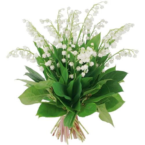 Bouquet muguet for Bouquet de fleurs muguet